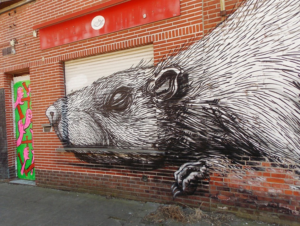 Big rat in Doel