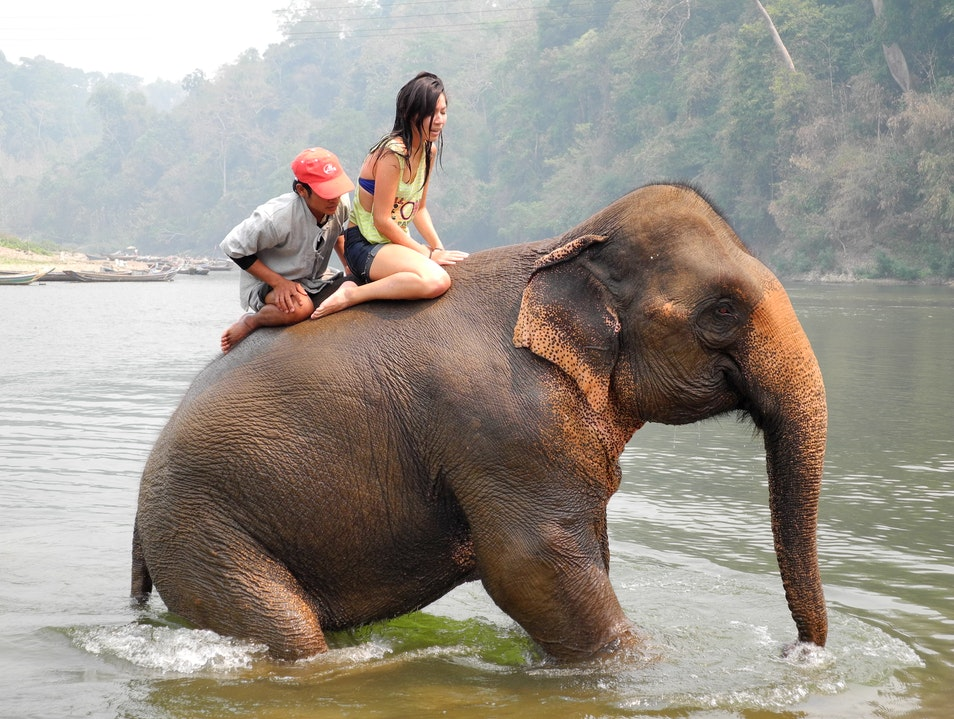 Relief and Amazement on an Elephant's back