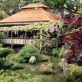 Japanese Tea Garden San Francisco California United States