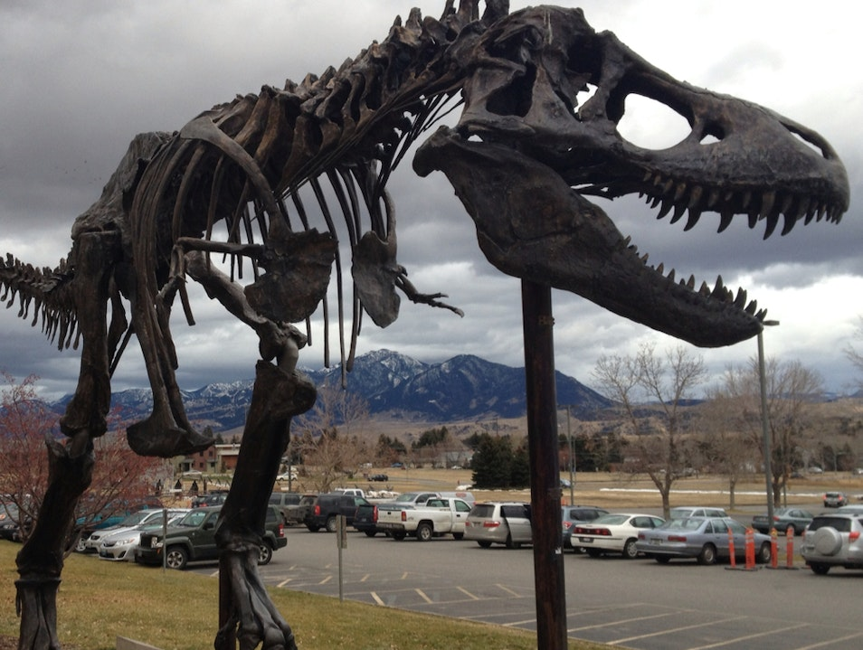 Dinosaurs and Native Americans Bozeman Montana United States