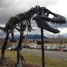 Museum of the Rockies
