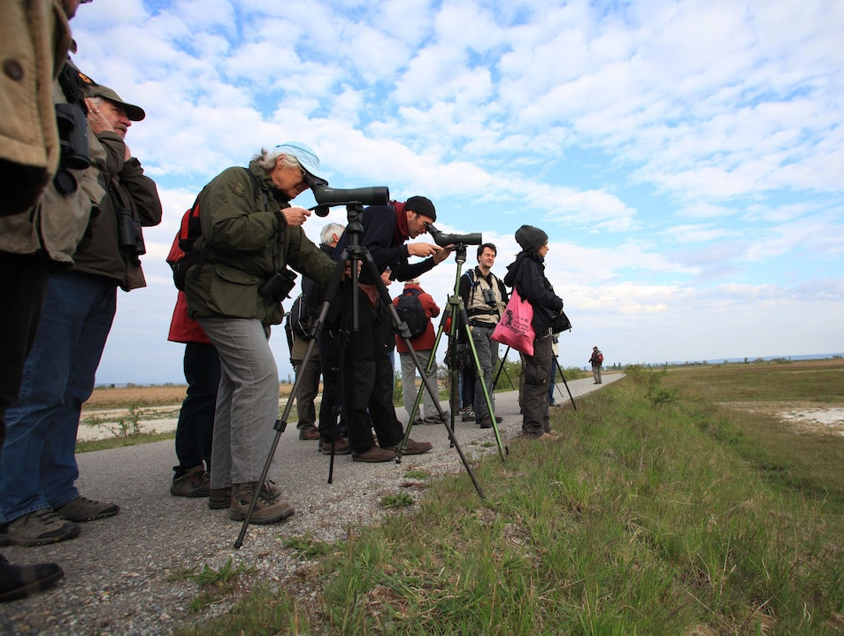 Birdwatching at Lake Neusiedl Oggau Am Neusiedler See  Austria
