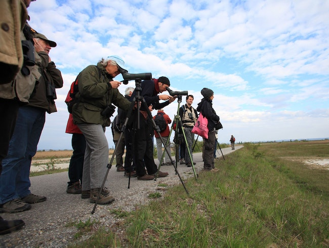 Birdwatching at Lake Neusiedl