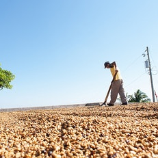 Taste El Salvador's Coffee