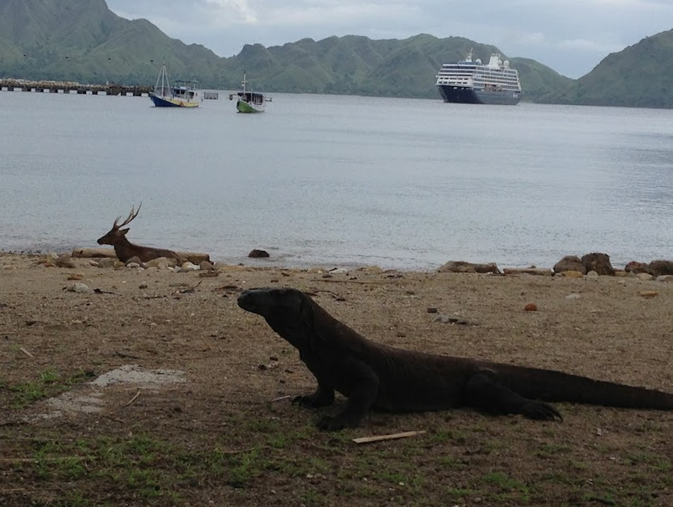 Predator and Prey sunning on Komodo beach Komodo  Indonesia