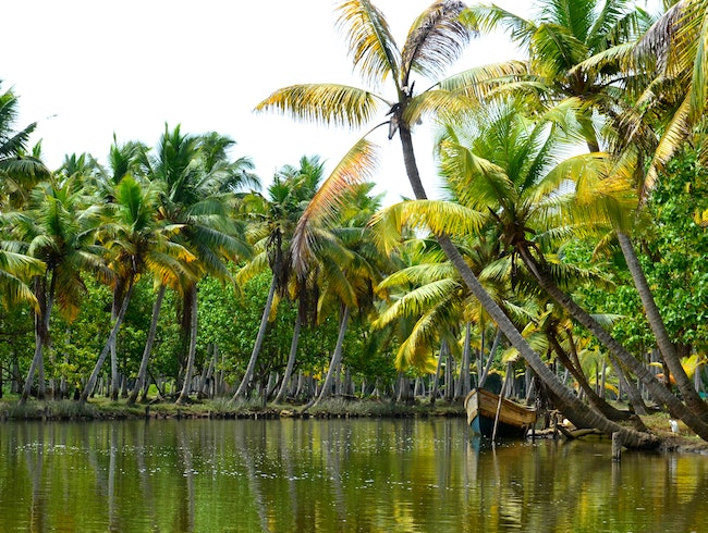 Relaxing on the Backwaters