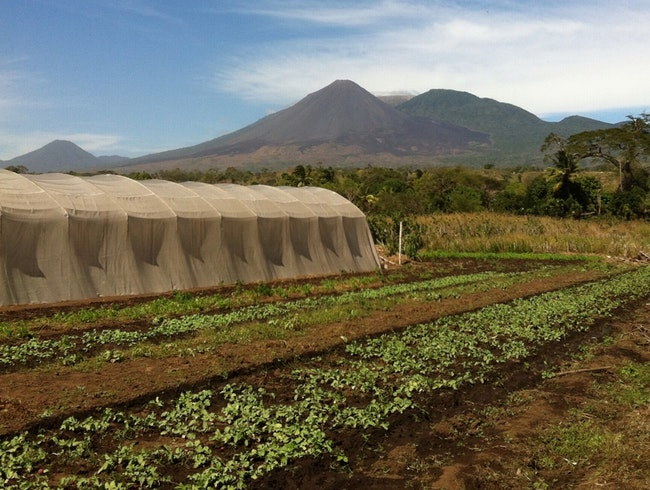 Farmers Under Watch Of Volcanos