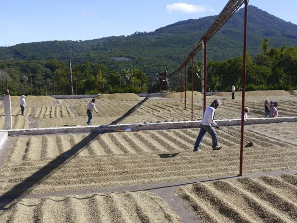 Tour a coffee mill in El Salvador