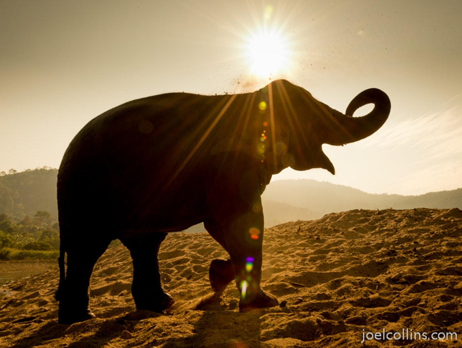 Elephant in the Sun
