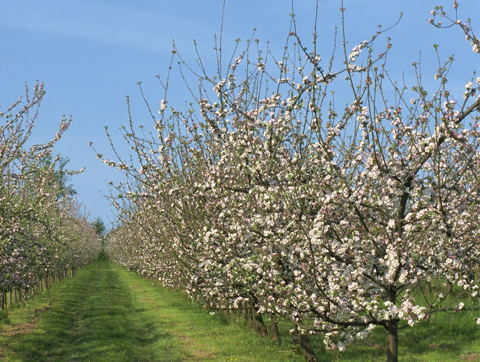 The Orchards of Passion