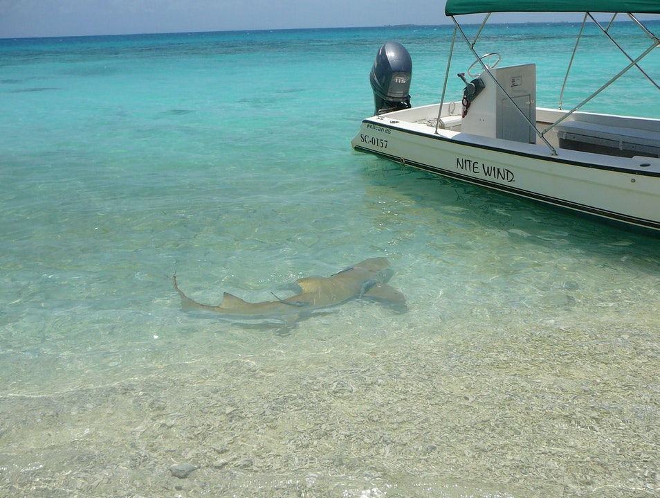 Shark!!!   Belize