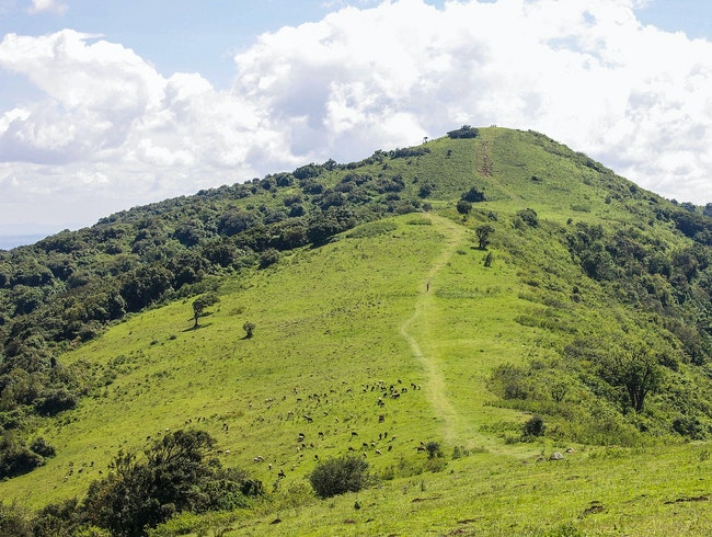 Hike the knuckle-like Ngong Hills