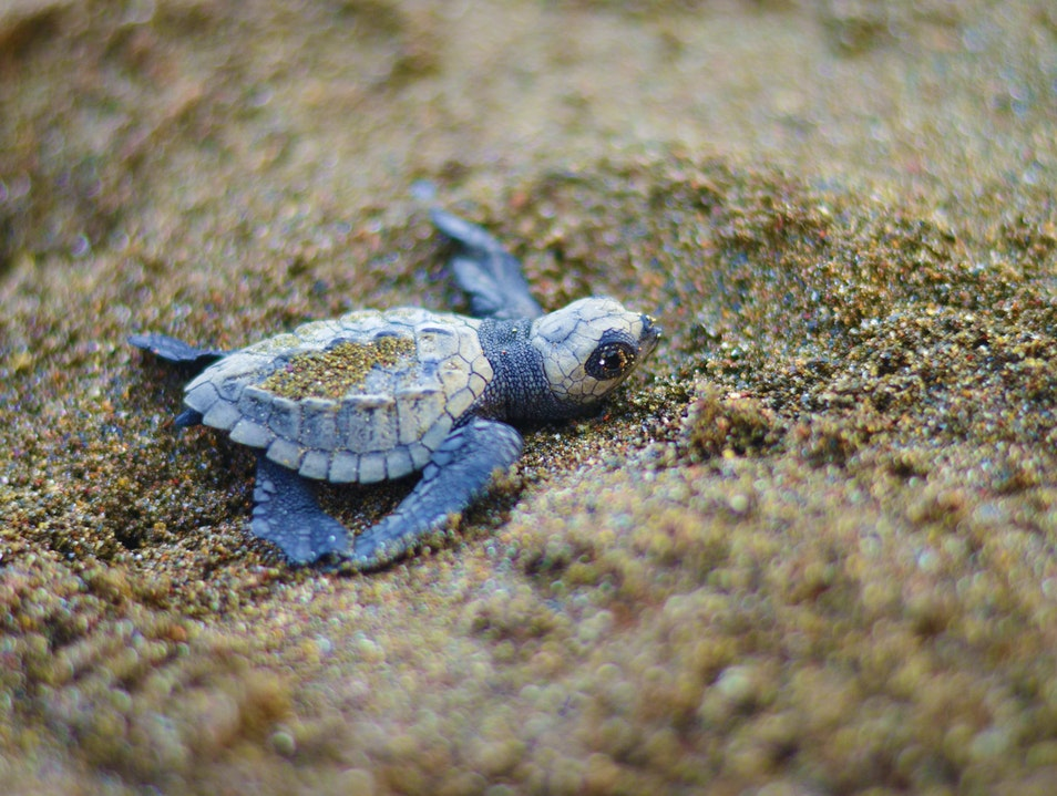 Find Your Bliss among Baby Sea Turtles in Costa Rica