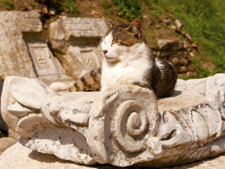 Cat on a Column Selçuk  Turkey