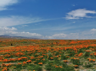 Antelope Valley California Poppy Reserve Lancaster California United States