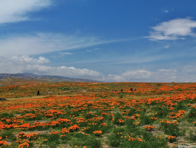 Frolicking in Poppy Fields