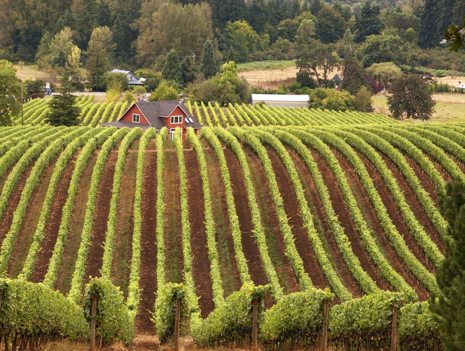 Symmetry of a Vineyard Newberg Oregon United States
