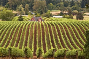 Oregon wine country