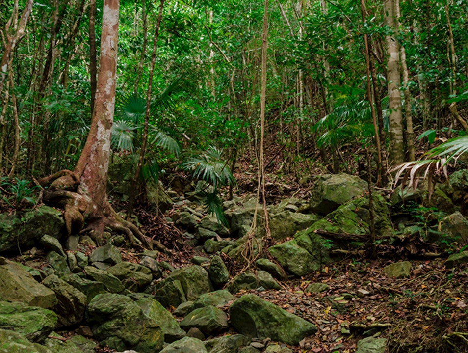 Reef Bay Trail and Petroglyphs, St. John Central  United States Virgin Islands