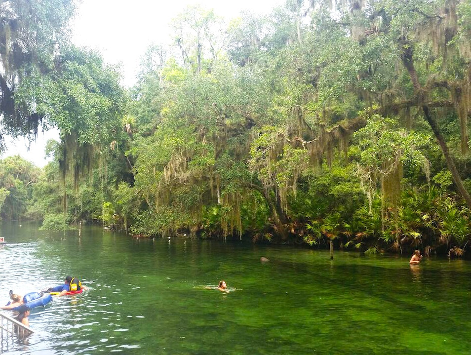 Snorkeling in Blue Springs, Florida Orange City Florida United States