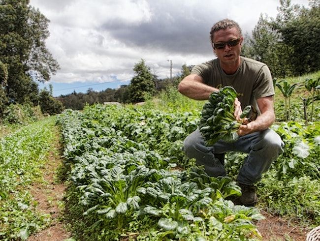 You Pick - Farm to Table in Maui