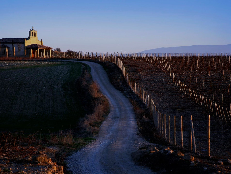 Get Behind the Scenes in a Spanish Winery  Briones  Spain