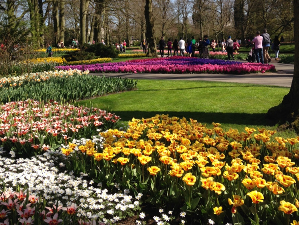 Keukenhof Gardens Lisse  The Netherlands