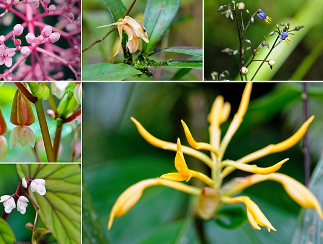 Go Orchid Hunting in Kinabalu Park