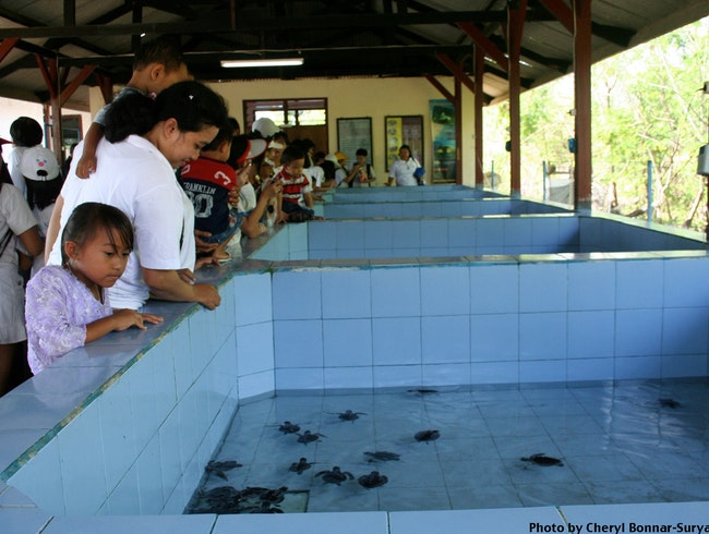 Saving Sea Turtles in Serangan