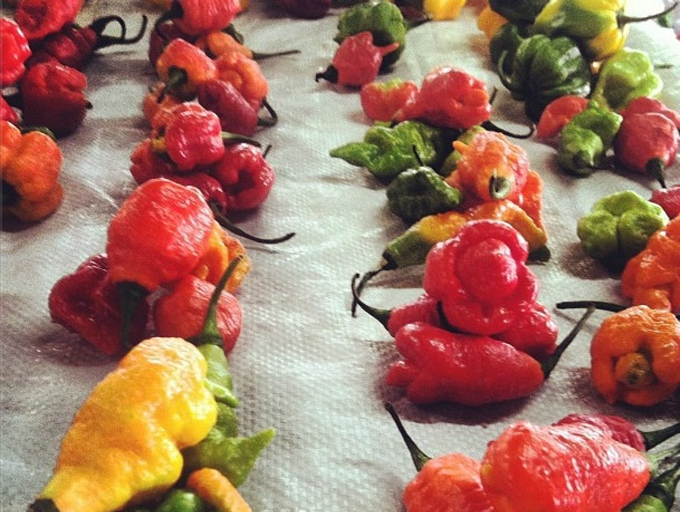 Where to Find the Hottest Pepper in the World Petit Valley  Trinidad and Tobago