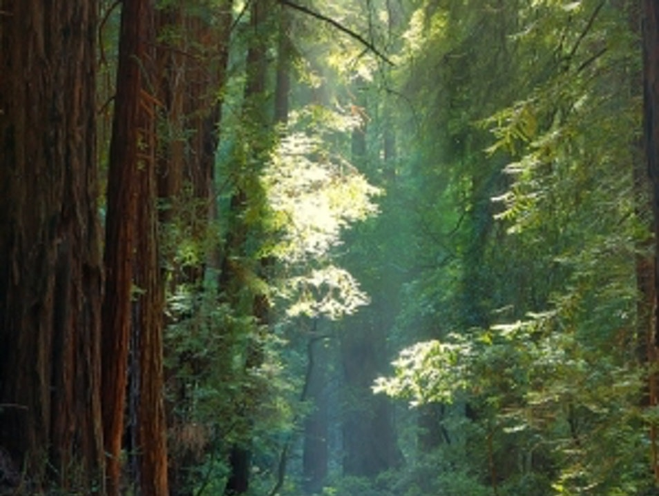 About Muir Woods National Monument