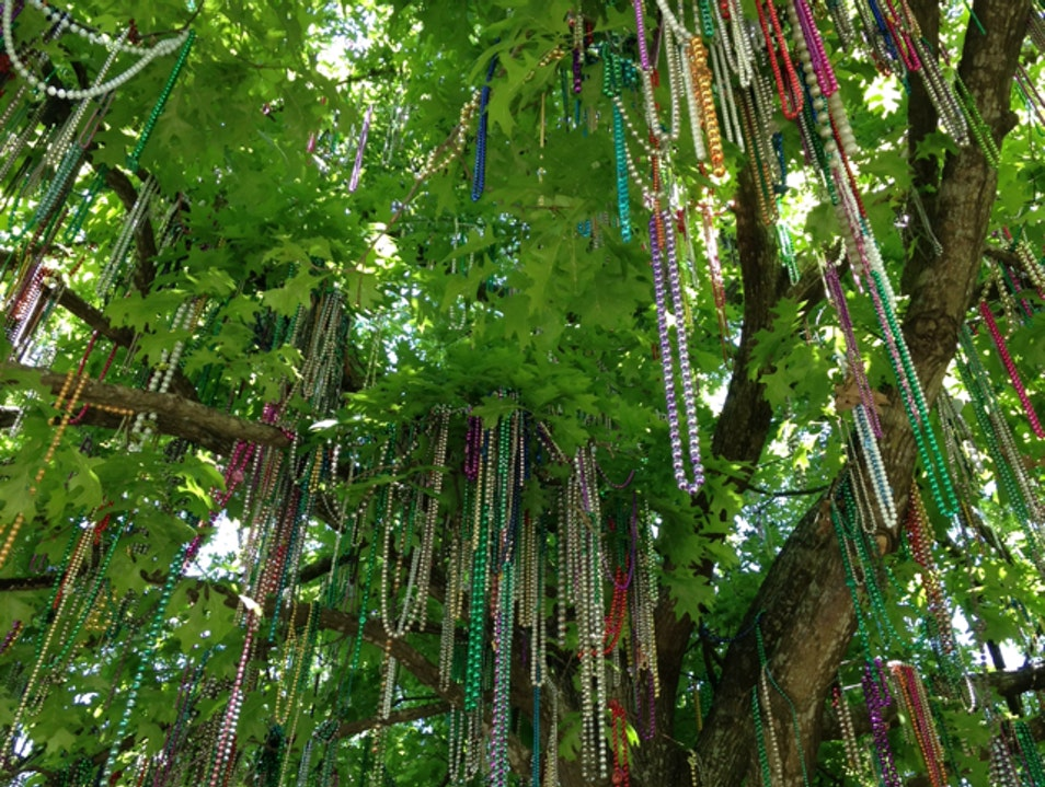 Mardi Gras Tree New Orleans Louisiana United States