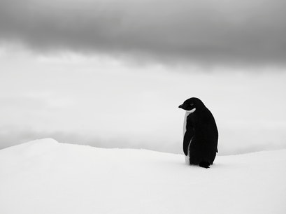 Weddell Sea   Antarctica
