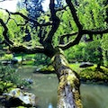 Japanese Garden Seattle Washington United States