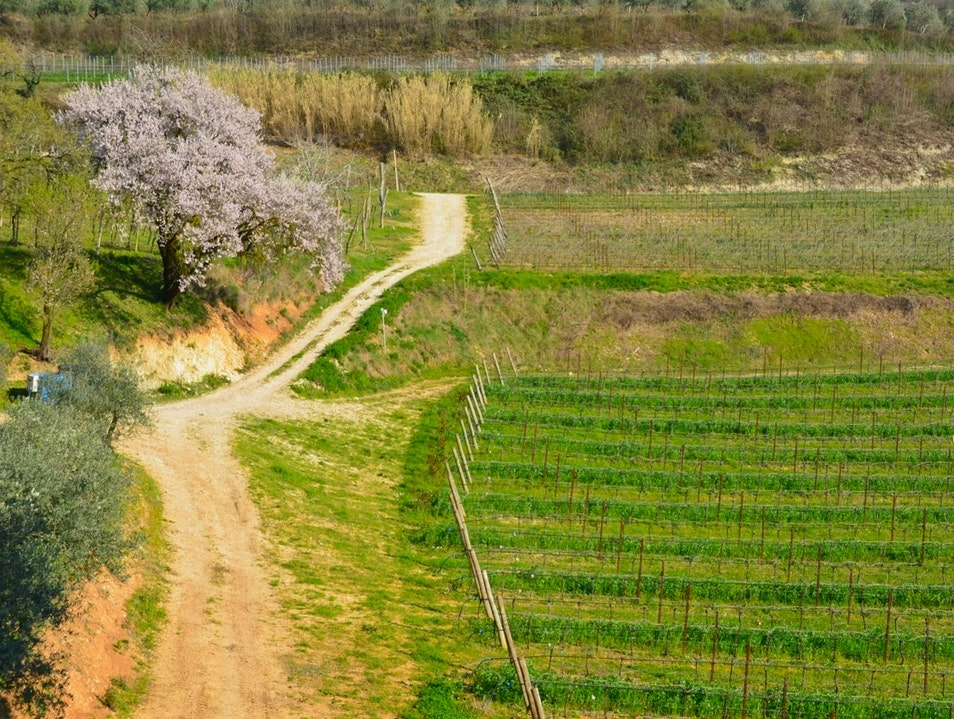 Find Amore for Amarone Wine, Just Outside of Verona, Italy