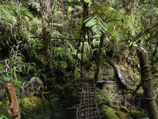Crossing the Papuan jungle