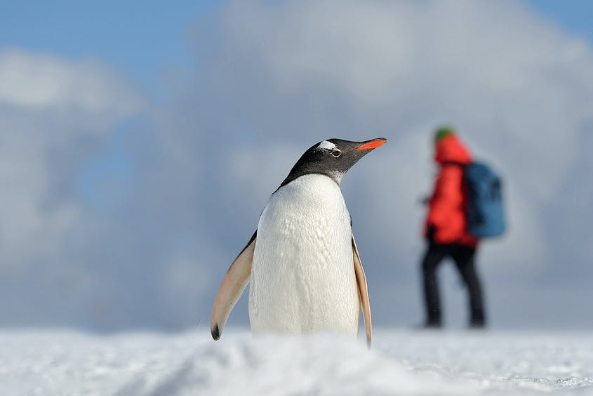 Save on your 2022 Antarctica cruise now.