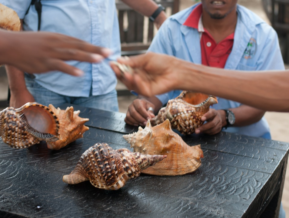 Trading for Conch Shells Cabarete  Dominican Republic