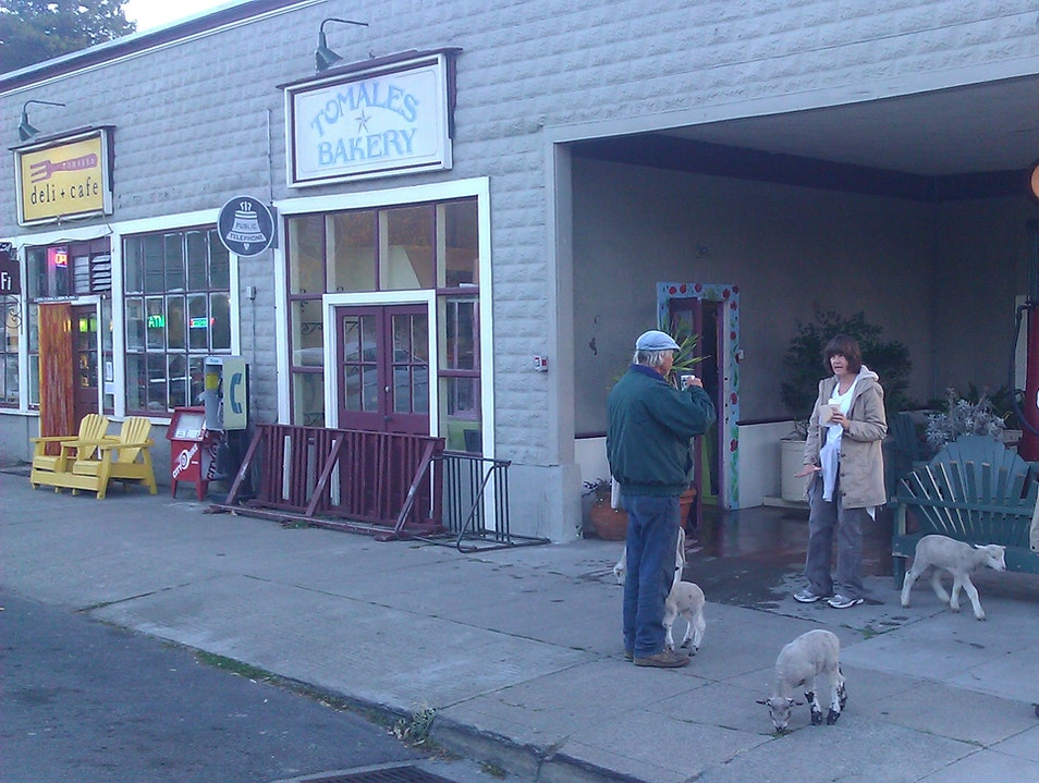 Made Fresh Daily Tomales California United States