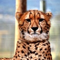 Cheetah Outreach Cape Town  South Africa