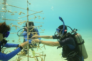 Coral Restoration Foundation Bonaire