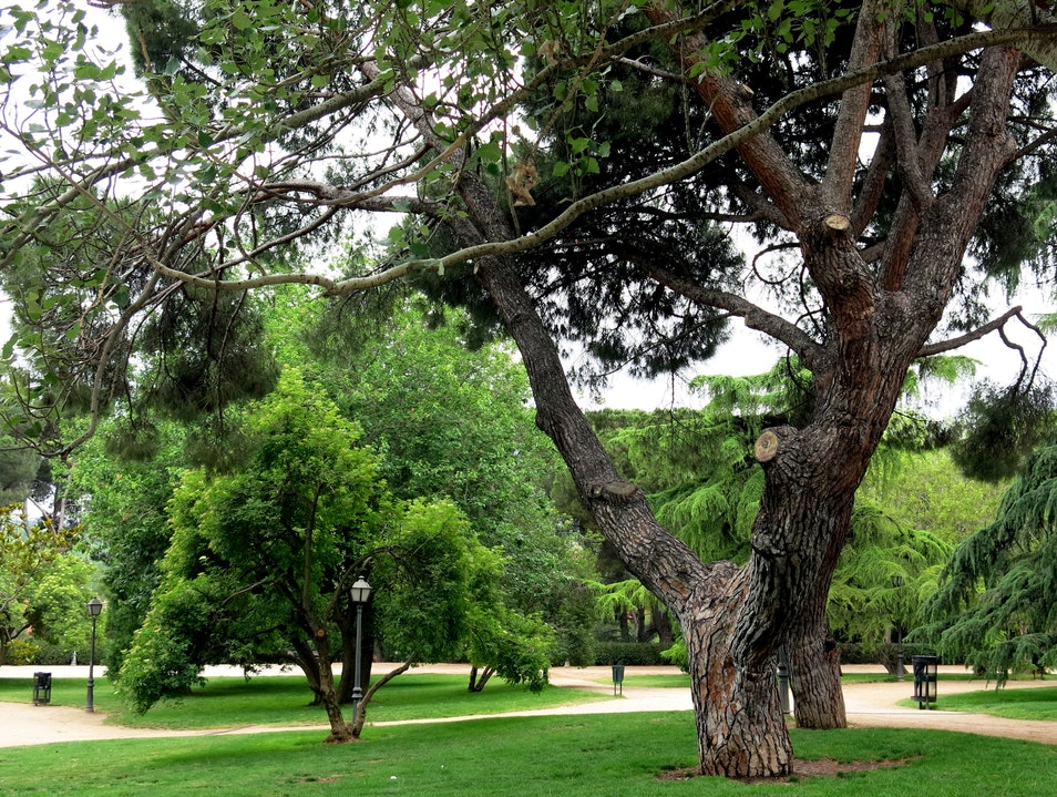 Parque del Oeste: Crowd-Free Green Space in Madrid Madrid  Spain
