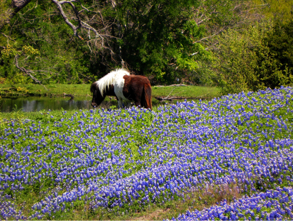 Bluebonnets and Farmers Markets