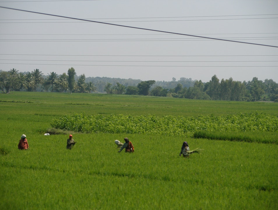 Ritual - Living off the land Puducherry  India