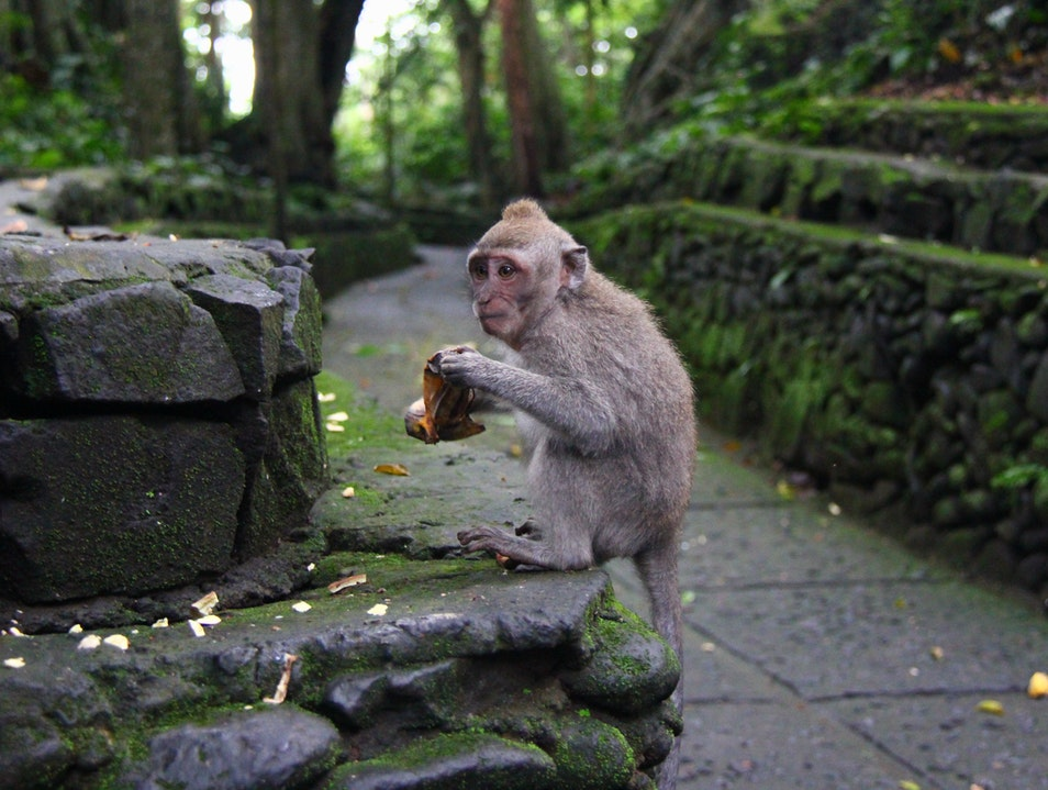 Mingle with Monkeys at the Sacred Monkey Forest Sanctuary in Ubud, Bali Ubud  Indonesia