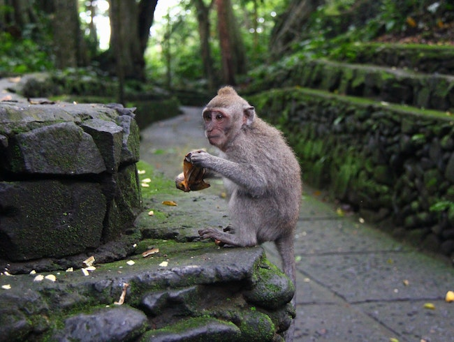 Mingle with Monkeys at the Sacred Monkey Forest Sanctuary in Ubud, Bali