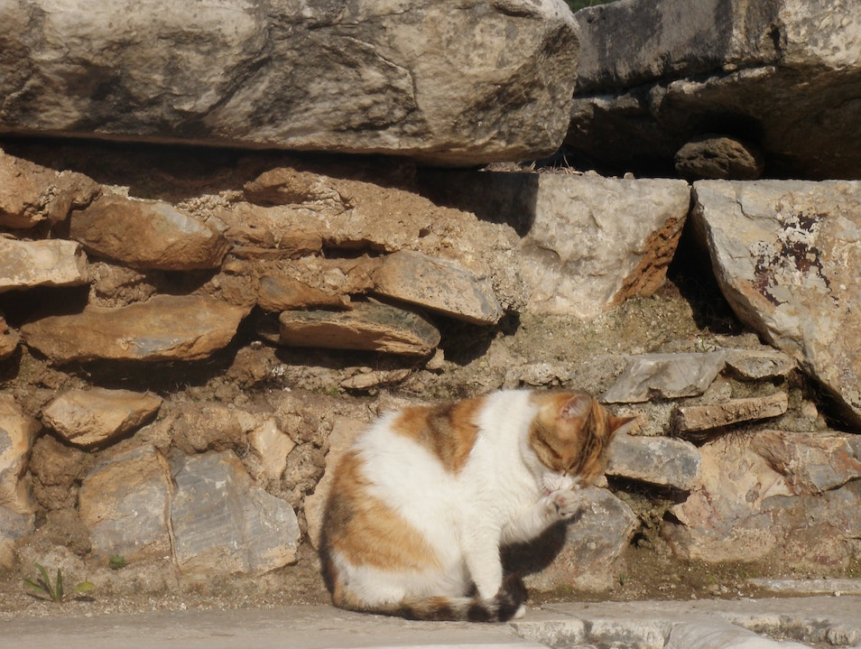 Ephesus's Cats Selçuk  Turkey