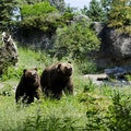 Original northern 20trail bear 20exhibit 202 ryan 20hawk.jpg?1448414382?ixlib=rails 0.3