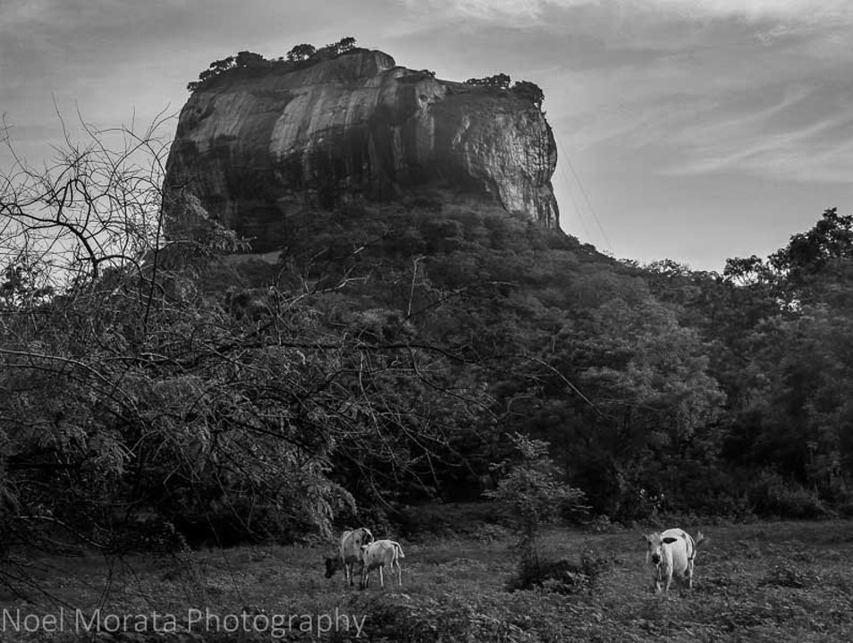 The Lion Rock at Sigiriya Sigiriya  Sri Lanka