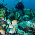 Dive Bequia Port Elizabeth  Saint Vincent and the Grenadines